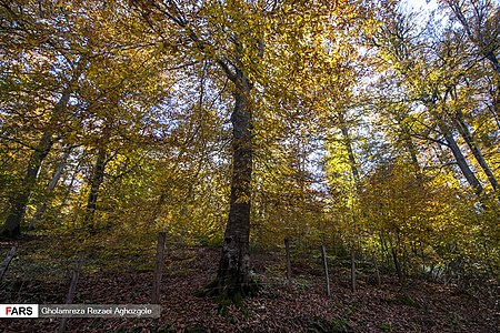 Caspian Hyrcanian Mixed Forests in Northern Iran 03.jpg