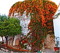 Castillo San Luis, monumento de Estepona con flores.jpg