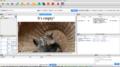 Cat homepage Huggle.png