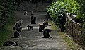 Cats in Sintra. Portugal.jpg