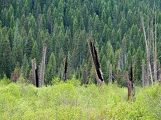National Register of Historic Places listings in Shoshone County, Idaho - Image: Cedar Snags 2 St Joe NF Idaho