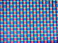 Celular visto desde un mcrooscopio.jpg