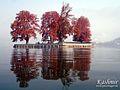 Char Chinar - panoramio.jpg