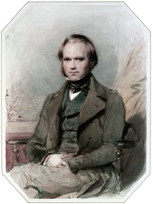 While still a young man, Charles Darwin joined the scientific elite. Portrait by George Richmond. Charles Darwin by G. Richmond.png