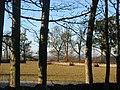 Chesterhill. - geograph.org.uk - 83034.jpg