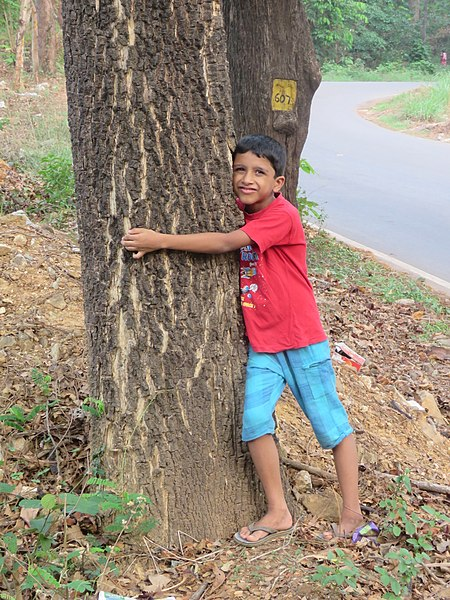 File:Child hugging tree at Peravoor (4).jpg
