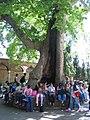 Children in Istanbul.jpg