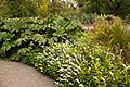Christchurch Botanic Gardens, New Zealand section, Hebes 2016-02-04-3.jpg