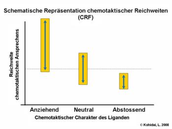 Schematische Repräsentation chemotaktischer Reichweiten (CRF)