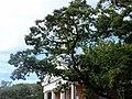 Church Trees NJ.JPG