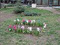City Garden flowers.jpg