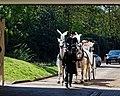 City of London Cemetery horse drawn hearse 1.jpg