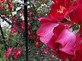 Cleveland Botanical Gardens Flowers.jpg