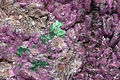 Cobaltocalcite, malachite 1100.FS2015.jpg
