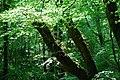 Coed Talhenbont Woods - geograph.org.uk - 802612.jpg