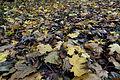 Colours of Autumn (11174846376).jpg