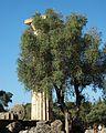 Columna del temple de Zeus i Olivera, Olímpia.JPG