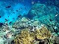 Coral reefs in papua new guinea.JPG