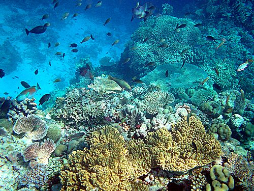 cause effect of coral sea Common identified coral diseases aspergillosis it affects 6 sp of sea fans and sea whips and is and release of bacterial toxins that cause.