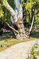 Corfu, Greece - panoramio (50).jpg