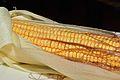 Corn Kernel - Howrah 2015-04-26 8458.JPG