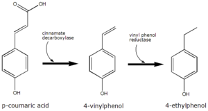 4-Ethylphenol - The conversion of p-coumaric acid to 4-ethylphenol by Brettanomyces