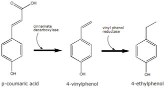 P-Coumaric acid - The conversion of p-coumaric acid to 4-ethyphenol by Brettanomyces
