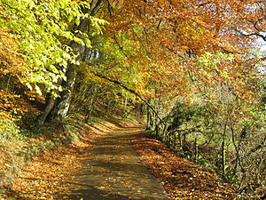 English: English country lane in Autumn.