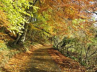Country lane.jpg