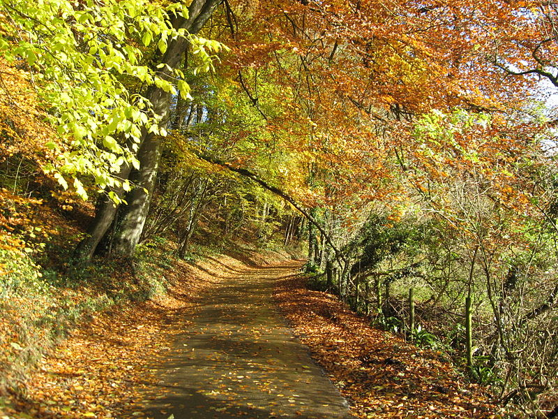 File:Country lane.jpg