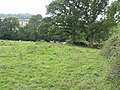 Cow Field - geograph.org.uk - 532782.jpg