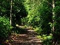 Cragside Estate, path to Blackburn Lake - geograph.org.uk - 920163.jpg