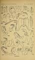 Craspedosomatidae of North America 1895 Plate IV.png