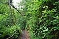 Crawfordsburn Glen near Bangor (5) - geograph.org.uk - 435986.jpg