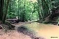Creek near Cedar Falls @ Hocking Hills State Park, Ohio - panoramio.jpg