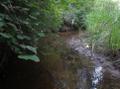 Creek wandering across Benvoulin Wetlands.png