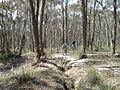Creswick Regional Park trail.JPG