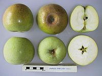 Cross section of Charles Eyre, National Fruit Collection (acc. 1921-010).jpg