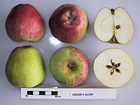 Cross section of Dekker's Glory, National Fruit Collection (acc. 1999-077).jpg