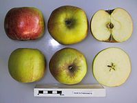 Cross section of Dick's Favourite, National Fruit Collection (acc. 1967-009).jpg