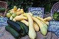 Cucurbita pepo Summer Squashes First Root Farm CSA Eleventh Pickup -4.jpg
