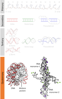 Nucleic acid quaternary structure