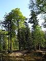 Dalfsen, Den Aalshorst tuin- en parkaanleg RM528702 (4).jpg