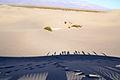 Death Valley sand dunes.JPG
