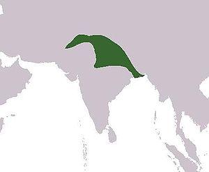 Islamic rulers in South Asia - Delhi Sultanate