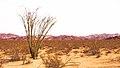 Desert Concept (33360684102).jpg