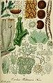 Deutschlands flora in abbildungen nach der natur (1832) (20879838082).jpg
