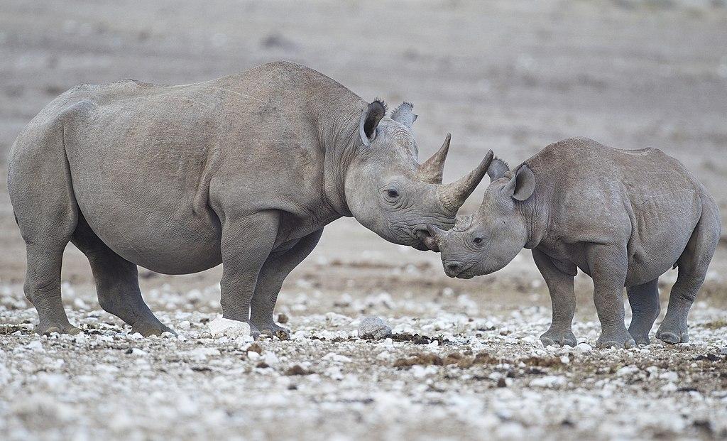 Fêmea e filhote no Parque Nacional Etosha