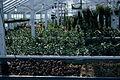 Dicksons Florist greenhouse beds 02.jpg