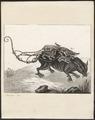 Didelphis dorsigera - 1700-1880 - Print - Iconographia Zoologica - Special Collections University of Amsterdam - UBA01 IZ20300108.tif
